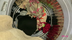 Check inside the washing machine at your parents' house (my sister's underwear and stained bread)?