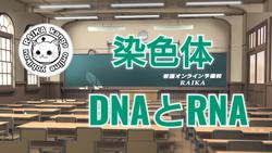 染色体・DNAとRNA